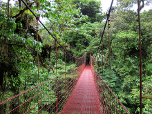 A lofty suspension bridge in the Monte Verde Cloud forest